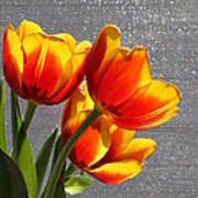 Red And Yellow Tulip's In A Window Poster by Robert D  Brozek