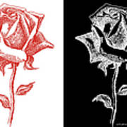 2 Red Rose Drawing Combo Poster