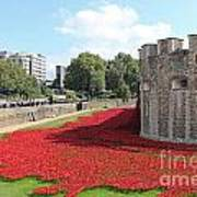 Remembrance Poppies At Tower Of London Poster