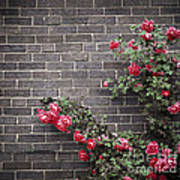 Roses On Brick Wall Poster
