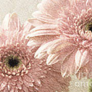 2 Silver Pink Painterly Gerber Daisies Poster
