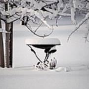 Snowy Bird Bath Poster