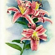 Stargazer Lilies Poster