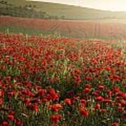 Stunning Poppy Field Landscape Under Summer Sunset Sky Poster