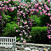 Pink Rose Garden Poster