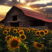 Sunflower Farm Poster