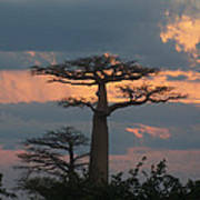 sunset in Madagascar Poster
