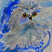 Teacup Owl Poster
