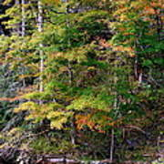 Tennessee Autumn Stream Poster