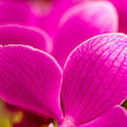 Tropical Orchid Flower Blossoms Poster