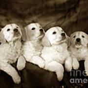 Vintage Festive Puppies Poster