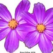Violet Asters Poster