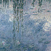 Waterlilies Morning With Weeping Willows Poster
