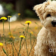 West Highland White Terrier Painting Poster
