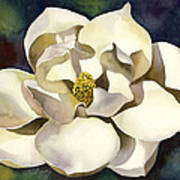 White Magnolia With Blues Poster