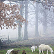 Winter Lambs Foggy Day Poster