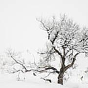 Winter Sage Poster