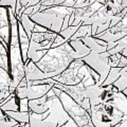 Winter Snow Scene In New England Poster