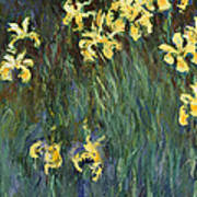Yellow Irises  Poster