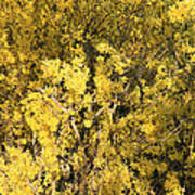 Yellow Spring Poster