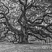 Angel Oak Tree In Black And White Poster