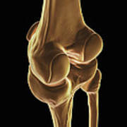 Knee Bones Right Poster