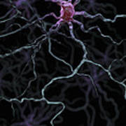 Neurons Poster