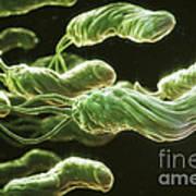 Helicobacter Pylori Poster