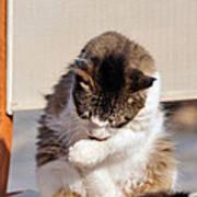 Cat In Hydra Island Poster