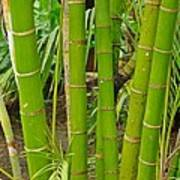 Bamboo Poster