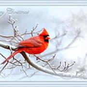 2559-1 Cardinal Poster