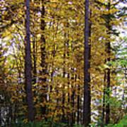 Autumn 5 Poster