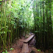 Boardwalk Passing Through Bamboo Trees Poster