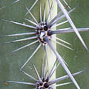 Cactus Thorns Poster