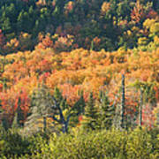 Colorful Fall Forest Near Rangeley Maine Poster