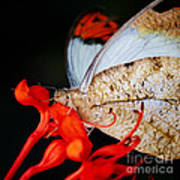 Colorful Portrait Of A Butterfly  Poster