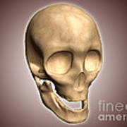 Conceptual Image Of Human Skull Poster by Stocktrek Images