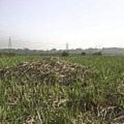 Cut And Dried Grass Along With Growing Grass Poster