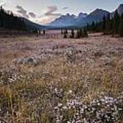 Engadine Meadow Poster