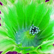 Green Cactus Flower Poster