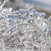 Ice Storm Alfalfa Poster