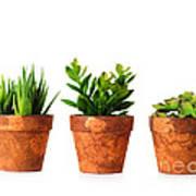 3 Indoor Plants Poster