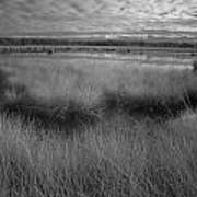 Infrared Picture Of The Nature Area Dwingelderveld In Netherlands Poster by Ronald Jansen