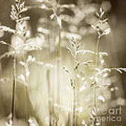June Grass Flowering Poster