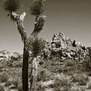 Joshua Tree National Park Landscape No 3 In Sepia Poster