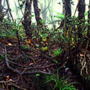 Misty Rainforest El Yunque Poster by Thomas R Fletcher