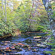 Pocono Mountain Stream Pennsylvania Poster
