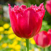 Red Tulips On The Green Background Poster
