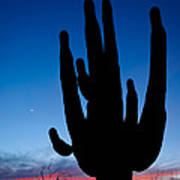 Saguaro Silhouette Poster