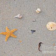 Sea Swag - Natural Poster
